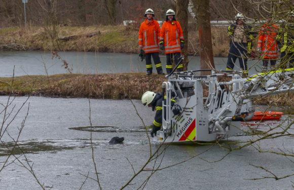 Haste: Feuerwehr rettet Hund aus Kiesteich