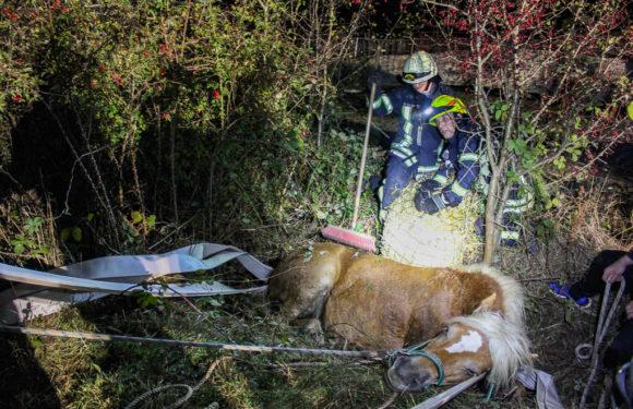 Feuerwehr rettet Pferd aus Graben