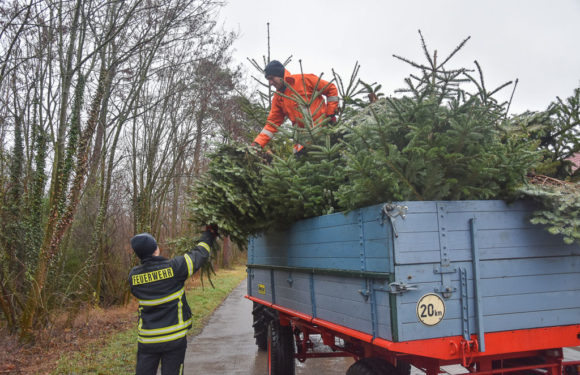 Jugendfeuerwehren der Stadt Bückeburg sammeln ausgediente Weihnachtsbäume ein