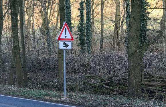 Amphibienschutz an den Straßen des Landkreises Schaumburg