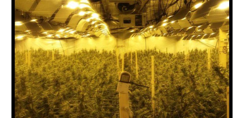 Drogen, Geld und Autos beschlagnahmt: Große Durchsuchungsaktion von Polizei und SEK