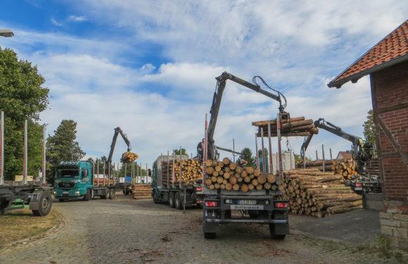 Obernkirchen: Halteverbot in der Bahnhofstraße wegen Holztransporten