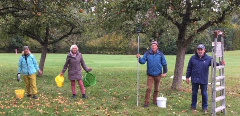 Obernkirchen: Golfclub-Mitglieder ernten die Früchte des Platzes