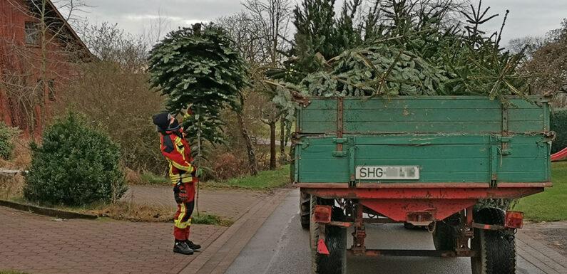 Feuerwehren sammelten Tannenbäume ein