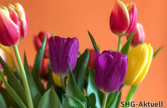 Niedersächsische Corona-Verordnung geändert: Blumenläden dürfen öffnen