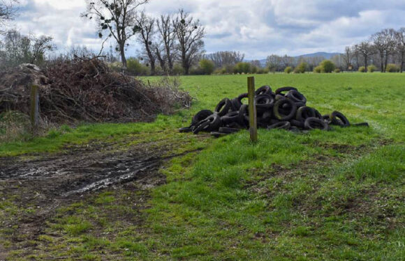 Bückeburg: Umweltverschmutzung durch illegal entsorgte Altreifen