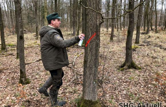 Daseinsfürsorge im Schaumburger Wald: Aufforsten als Generationenverpflichtung