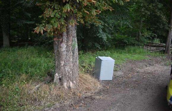 Gefrierschrank am Wald entsorgt